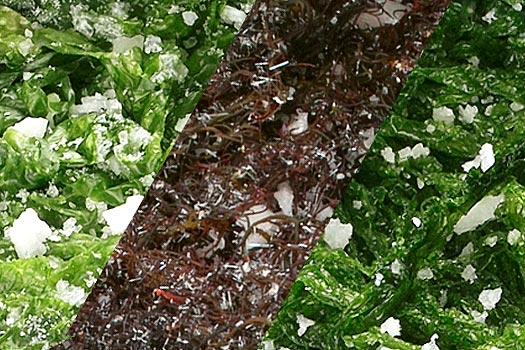Mixtura de algas en salazón - Suralgas
