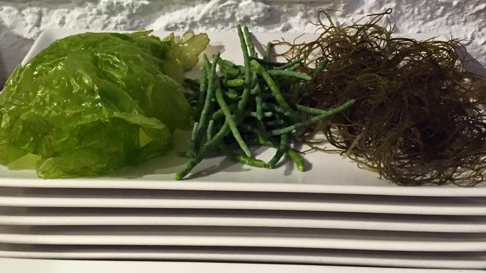 variedades de algas
